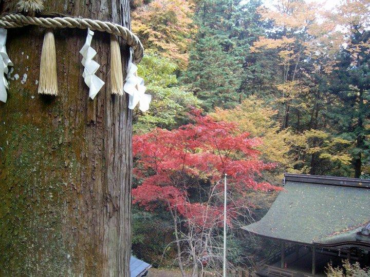 Mt Kurama hiking trail