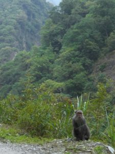 A monkey on the path in Taroko Gorge