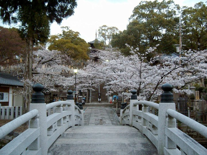 The graveyard and pond at Kurodani temple, with cherry trees in full bloom