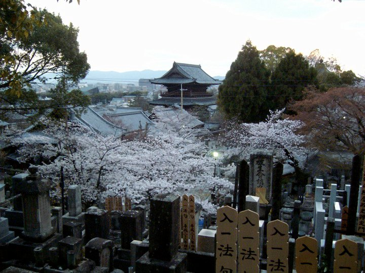 Cherry blossoms and city views at Kurodani temple