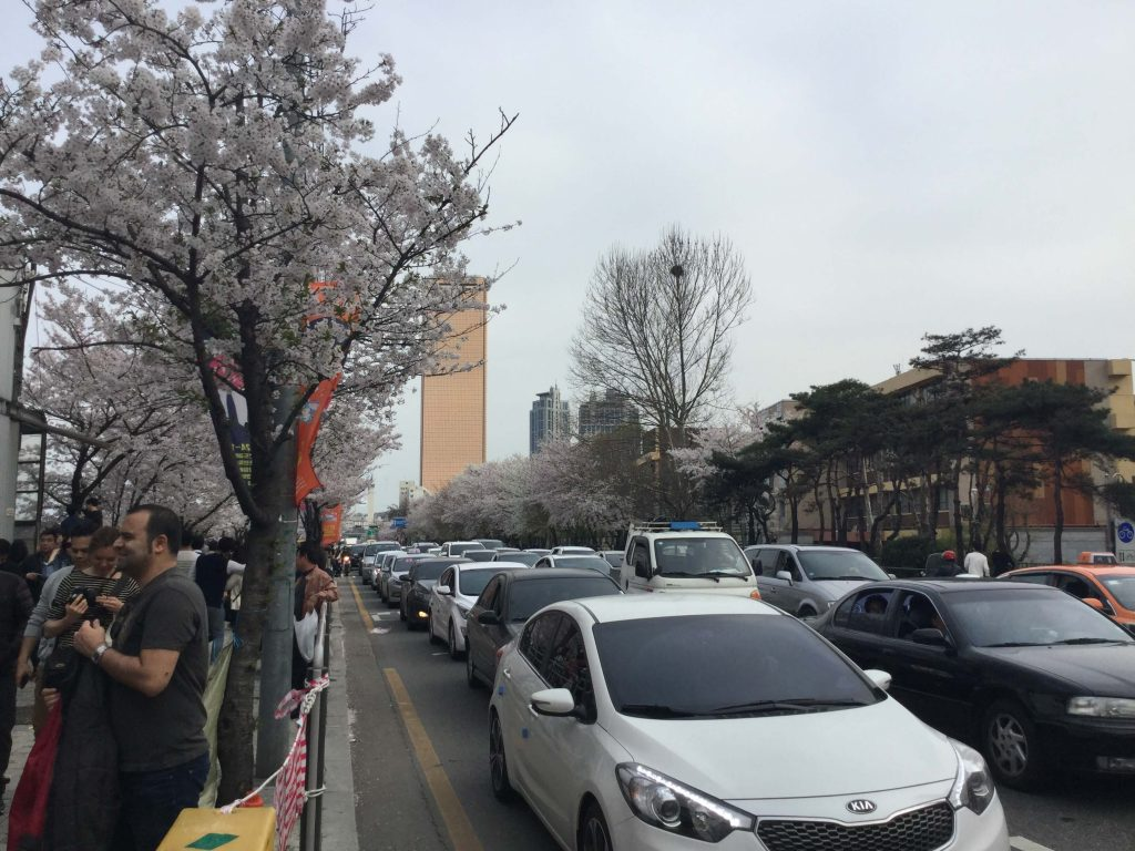 Cherry blossoms (and lots of people and cars) outside Yeouinaru Station