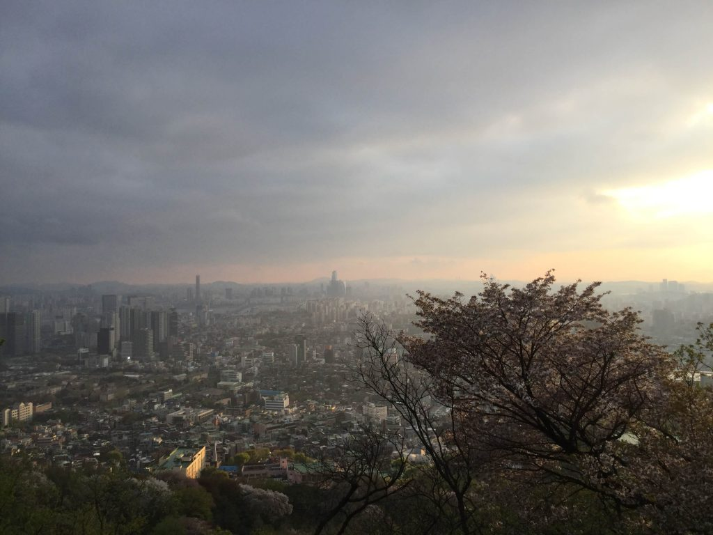 Namsan cherry blossoms and city view