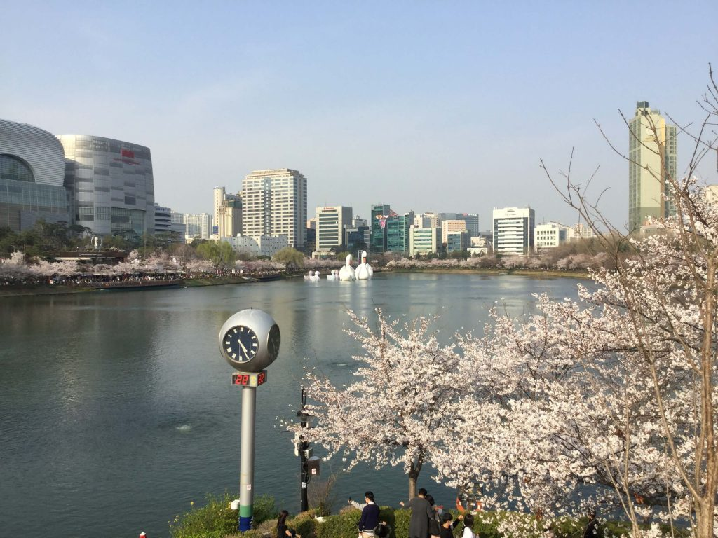 Cherry blossoms at Seokchon Lake