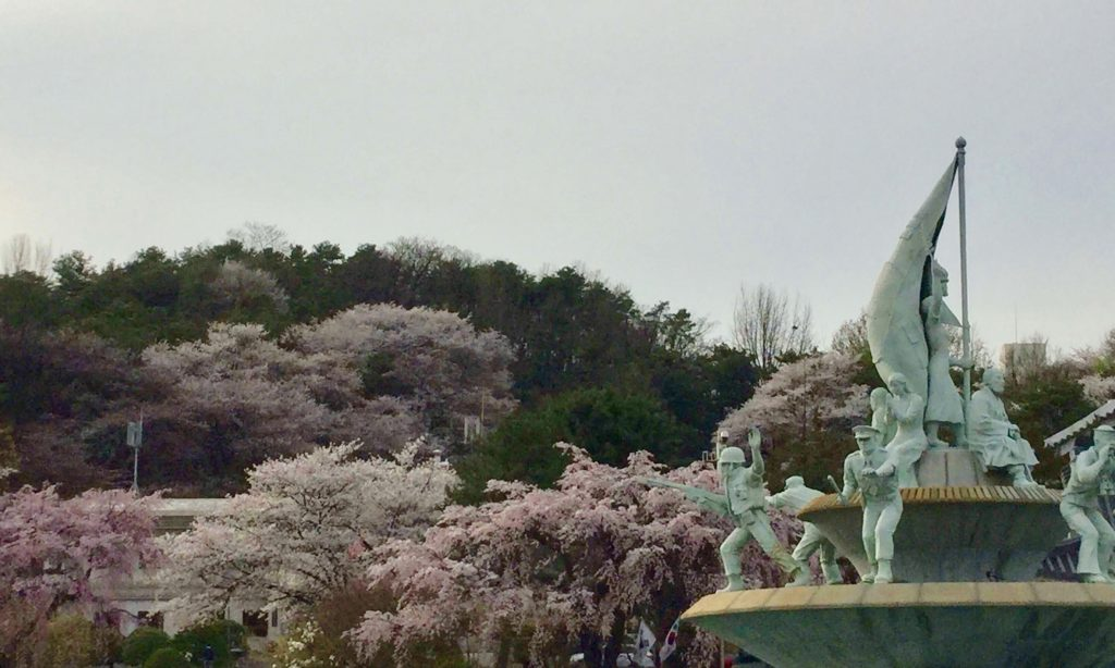 Cherry blossoms at Seoul National Cemetery
