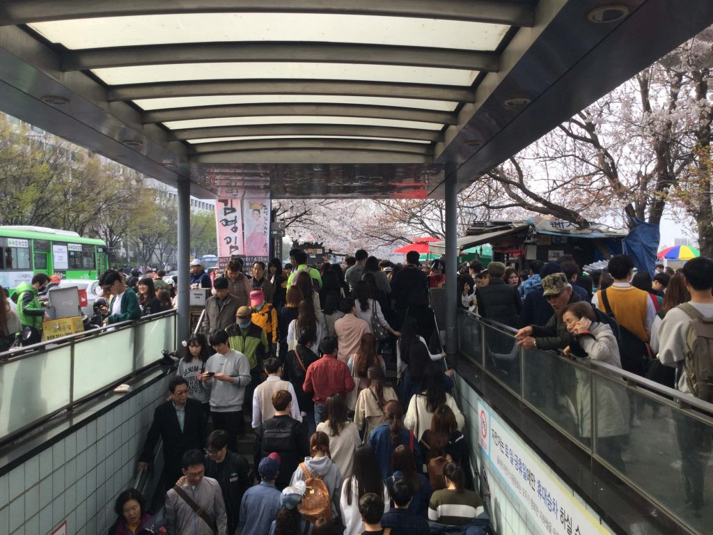 Heavy crowds for th cherry blossoms at Yeouinaru Station