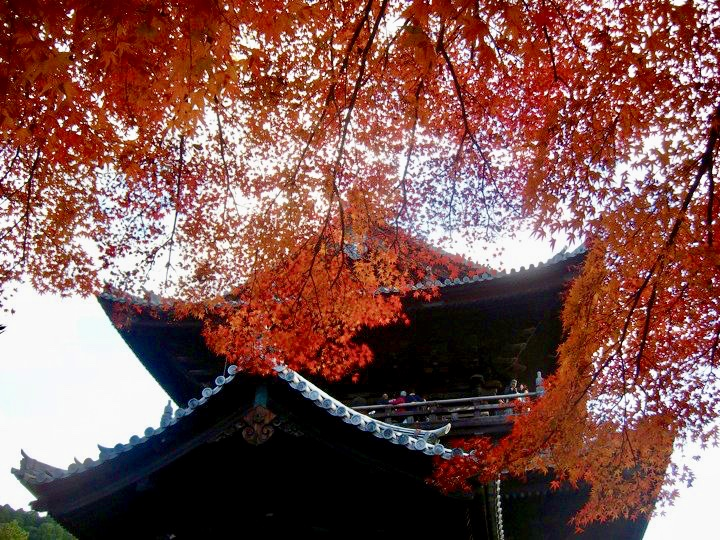 Nanzenji autumn colours