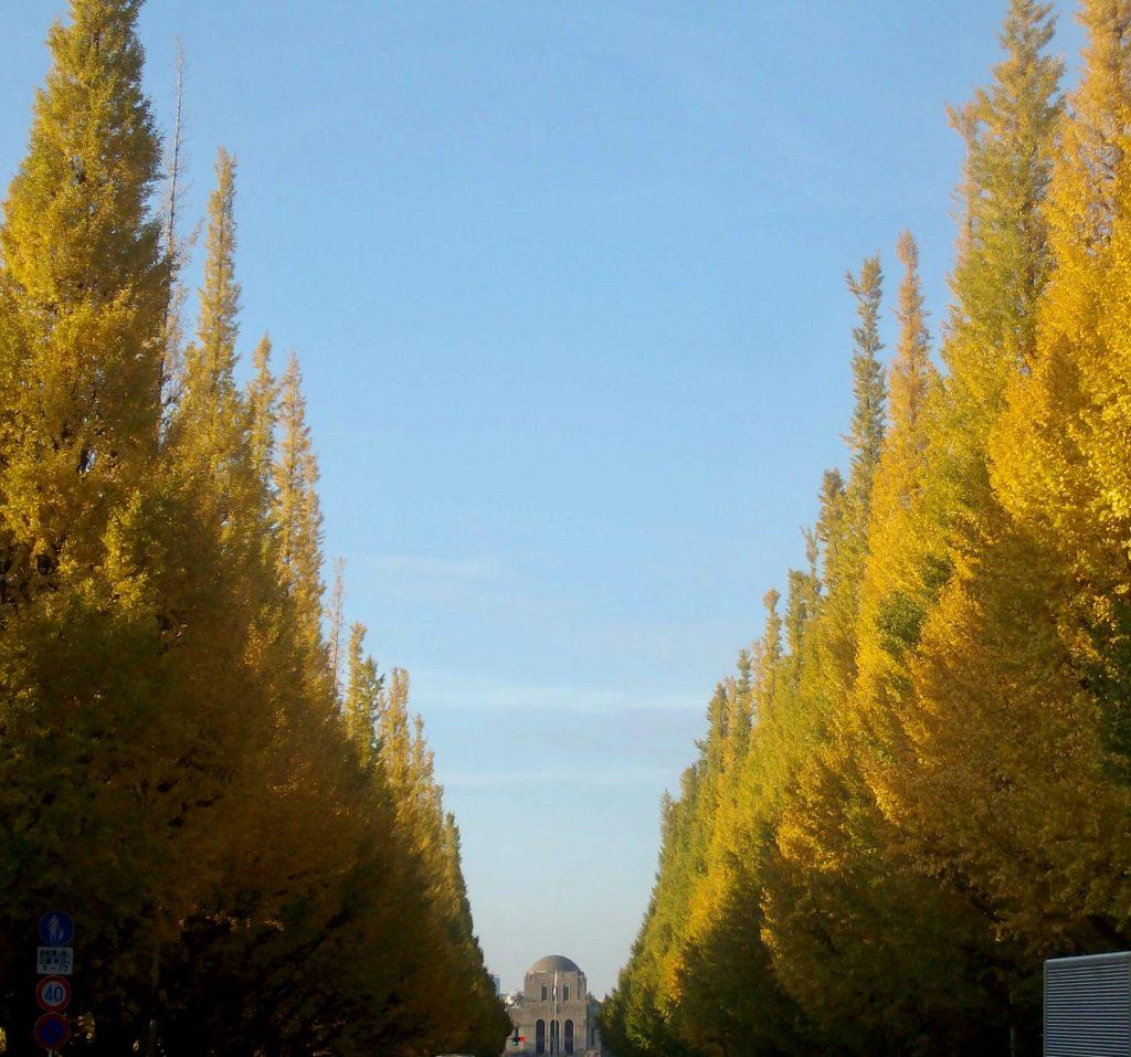 Tokyo's Ginkgo Avenue in Autumn