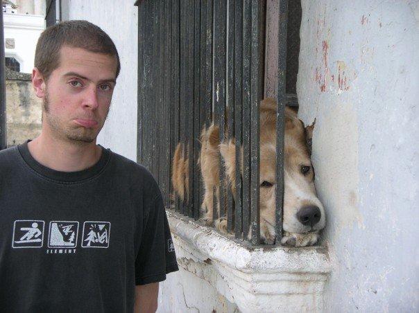 Cute dog in Antigua