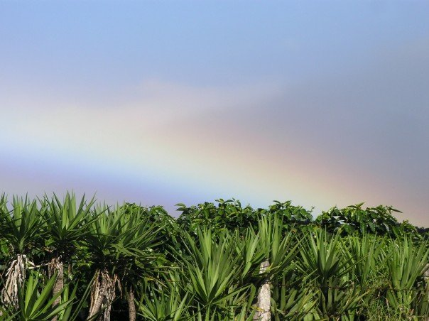 Rainbow over a coffee plantation
