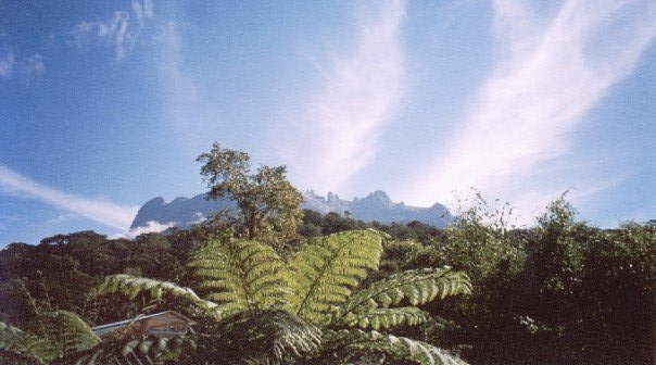 Mt kinabalu seen through the jungle