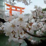 The Okazaki Canal, Heian Shrine torii gate, and cherry blossoms