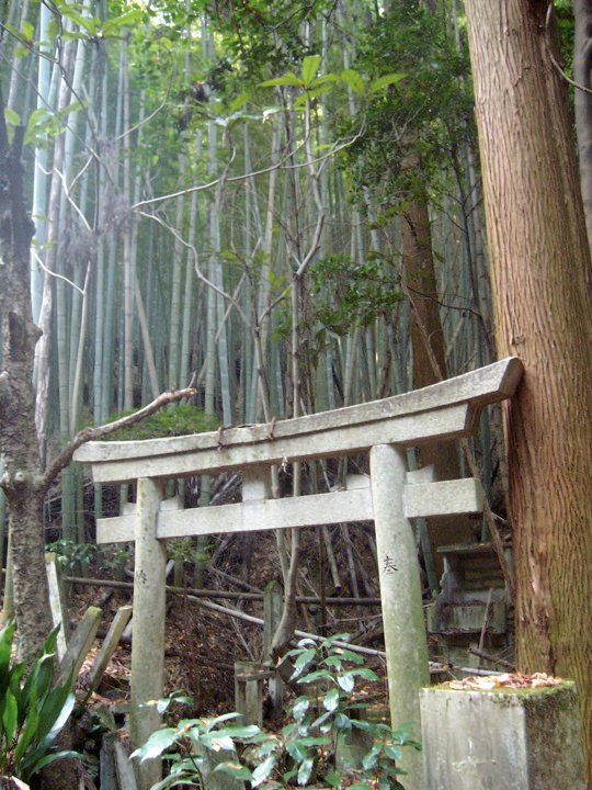 Abandoned shrine in the bamboo forest on Mt Inari
