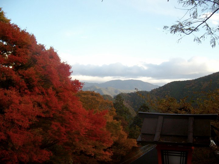 Autumn leaves at Mt Kurama