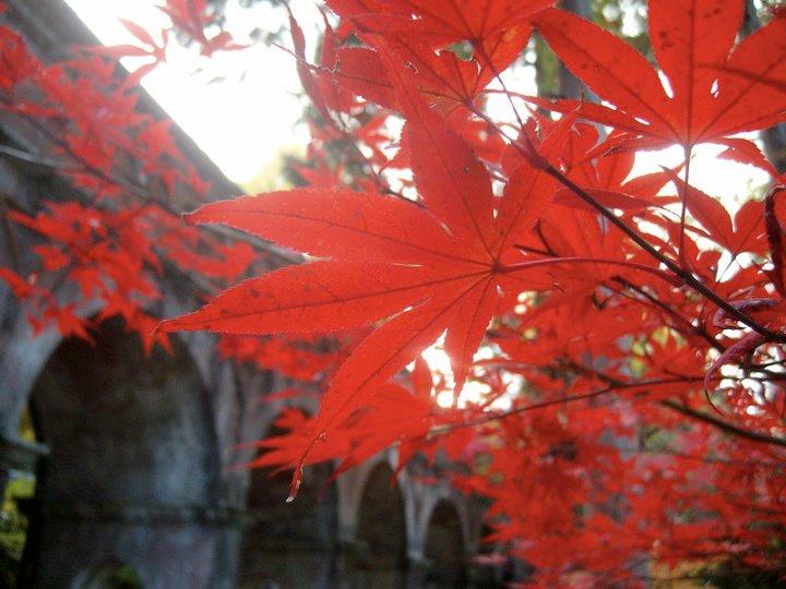 Autumn leaves in front of the Nanzen-ji aqueduct