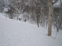 Amazing tree skiing at Rusutsu
