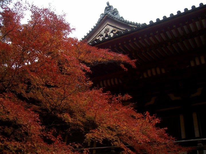 Autumn leaves at Jingoji temple, Takao