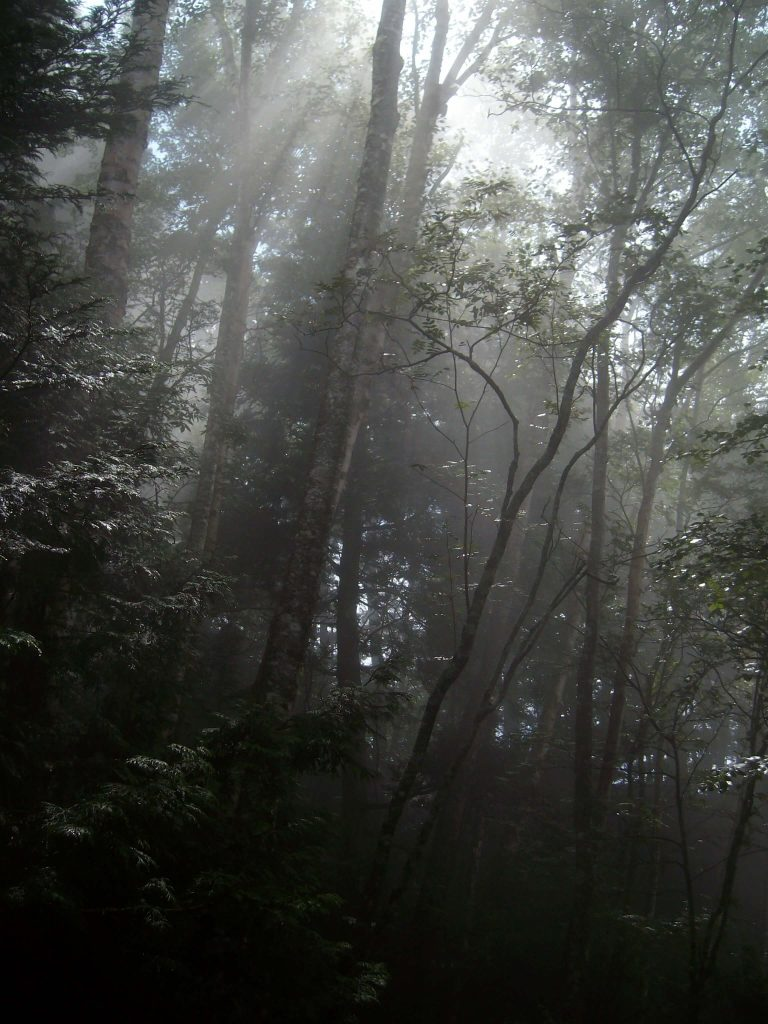 Sunlight trying to break through the clouds and the forest canopy