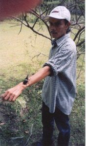 A huge stag beetle in Sumatra