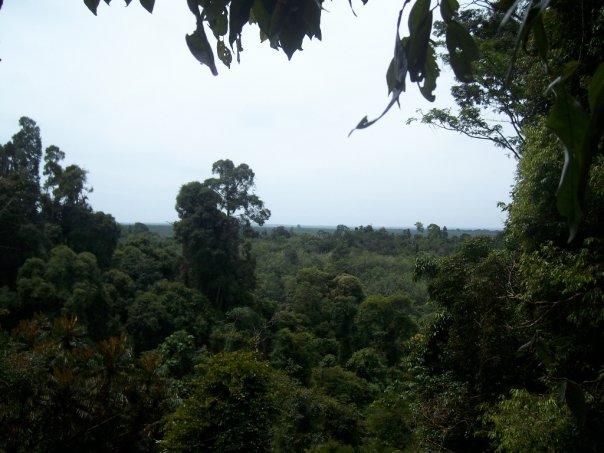 Gunung Leuser national park, Sumatra