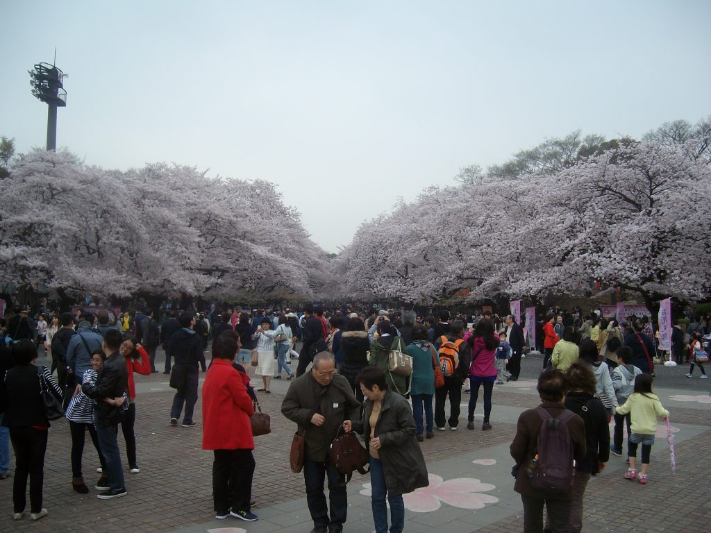 Heavy crowds at Ueno Park during full bloom