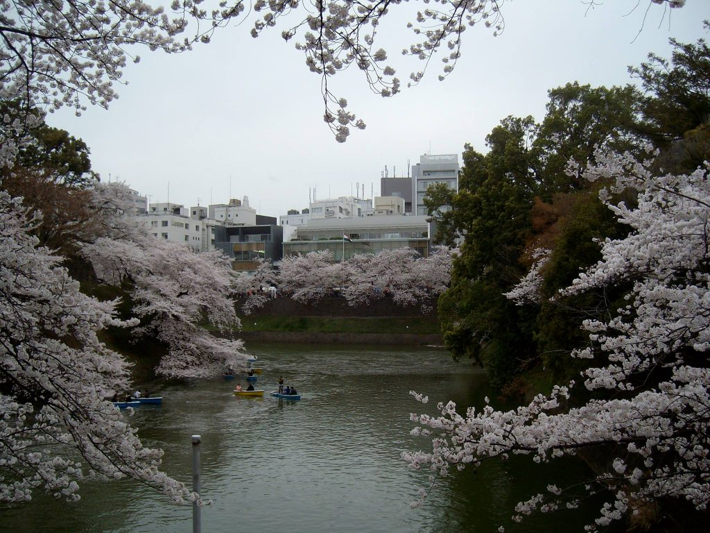 Cherry blossoms at Chidori-ga-fuchi