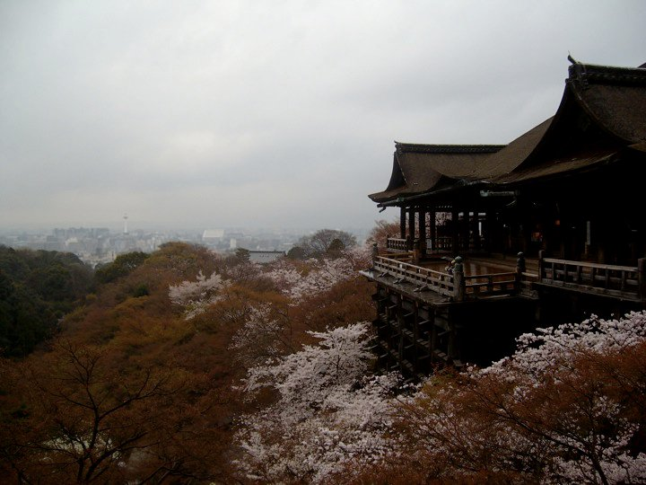 Cherry blossoms at Kiyomizu temple, with a distant view of Kyoto Tower
