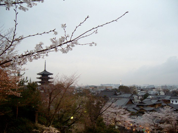 View of cherry blossoms, Hokanji pagoda, and Kyoto Tower