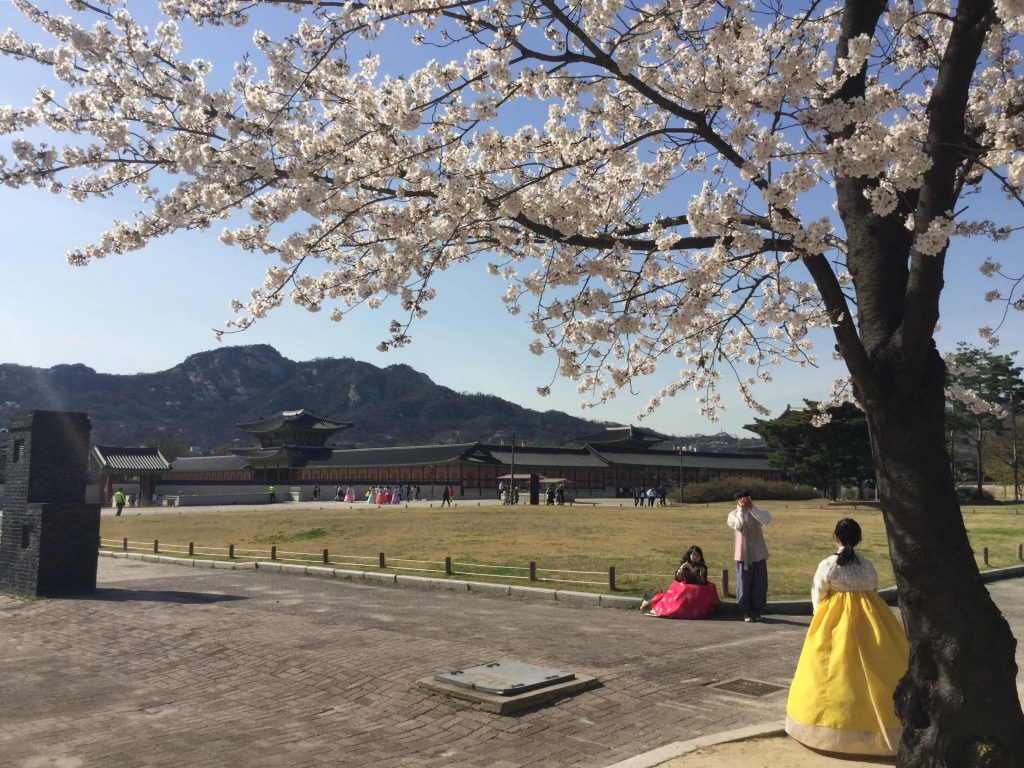 Cherry blossoms at Gyeongbokgung palace, Seoul