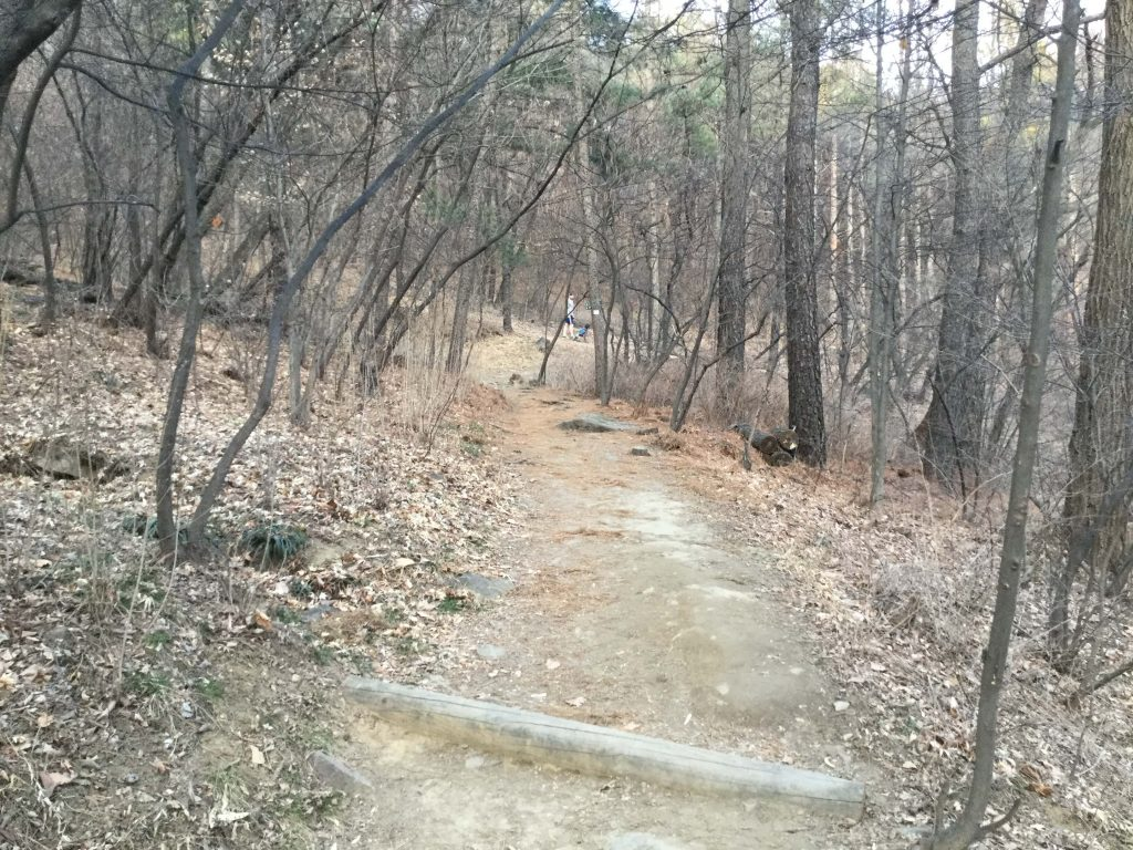 The forest trail on the south side of Namsan