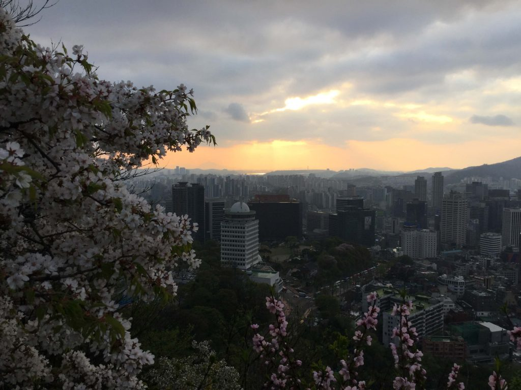 Namsan cherry blossoms