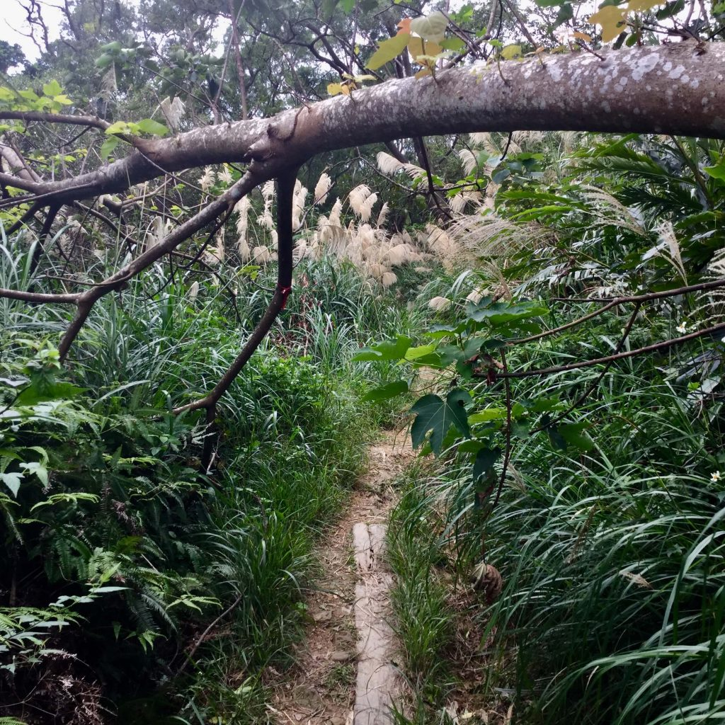 Overgrowth on the Zhanghu Trail