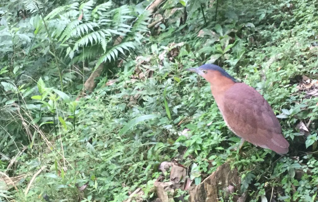 Large bird along the Yinhe Cave trail