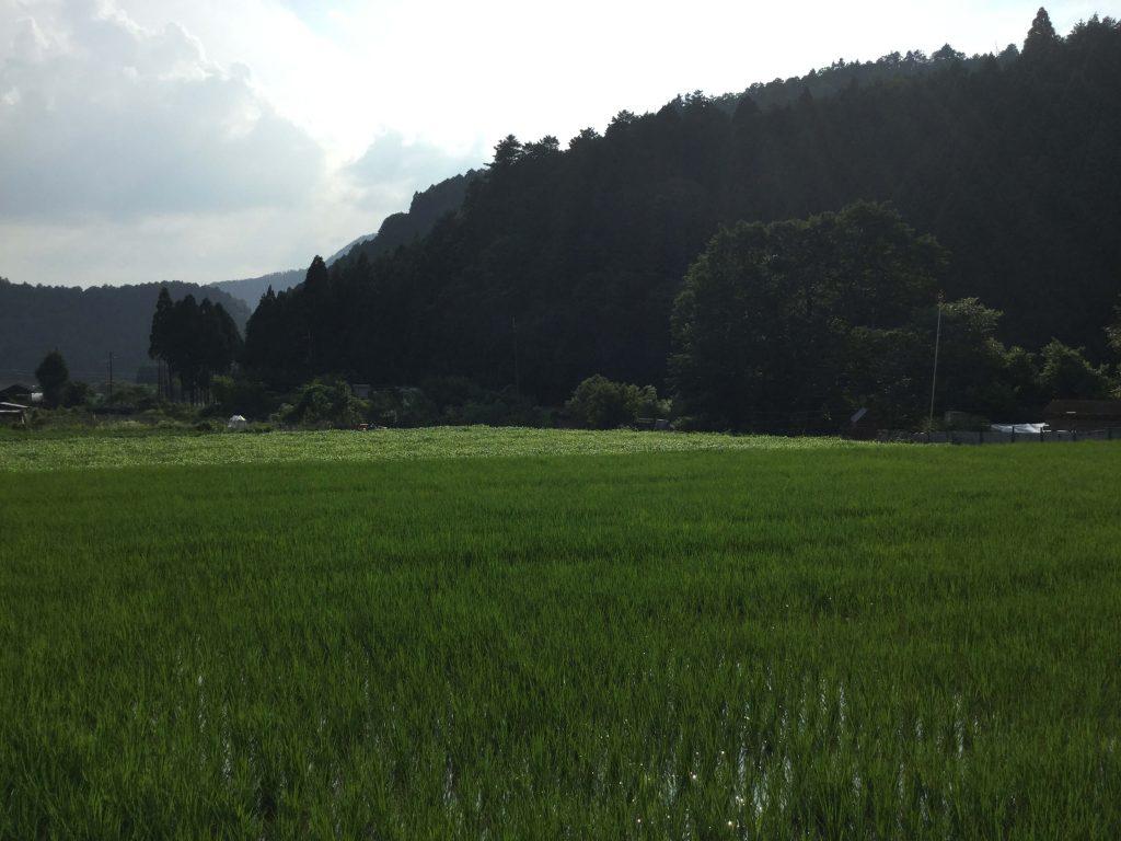 Rural scenes in Ohara