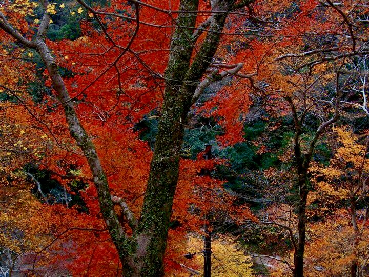 Autumn colours in Takao
