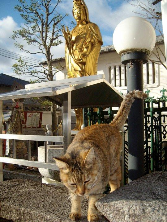 Fushimi Inari cat