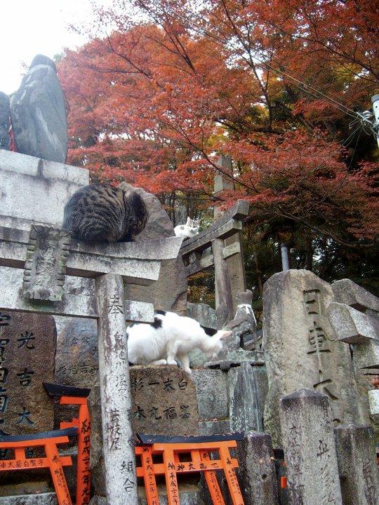 Fushimi Inari cats