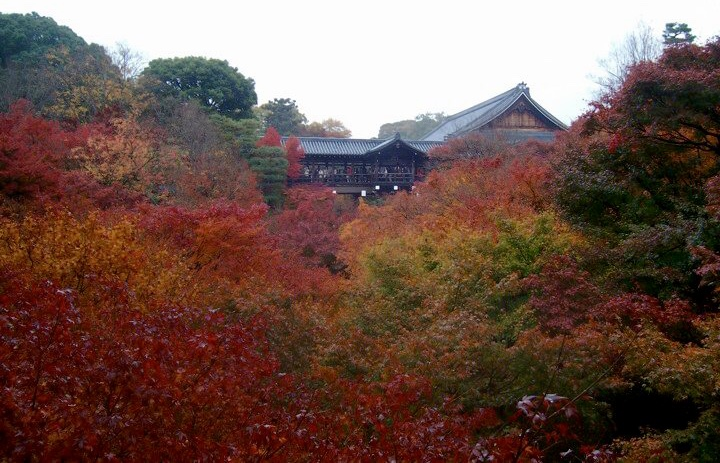 Tofukuji in autumn