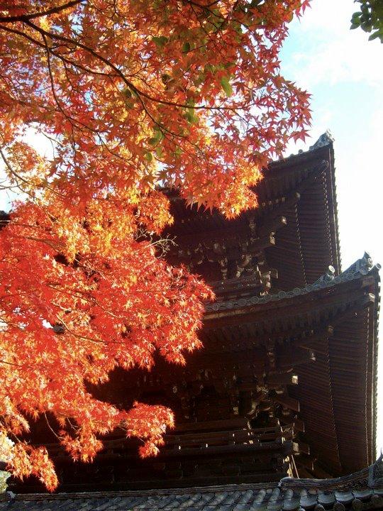 Nanzenji autumn colours