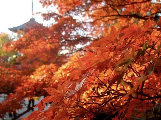 Shinnyodo koyo (autumn colours)