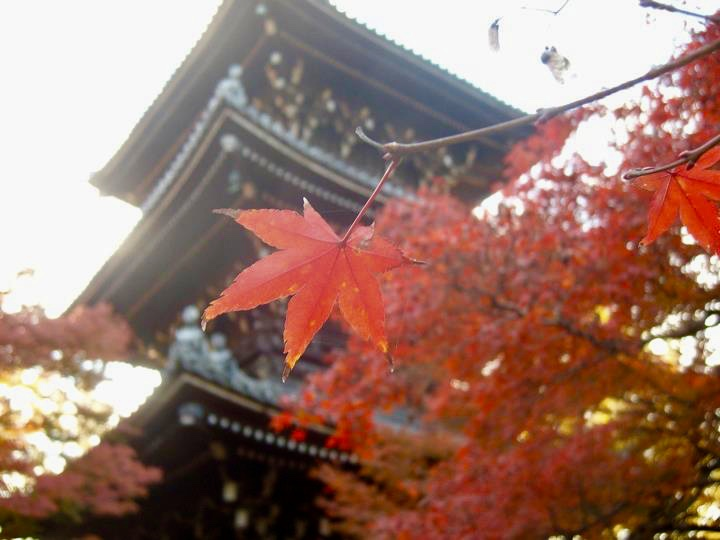 Shinnyodo autumn colours