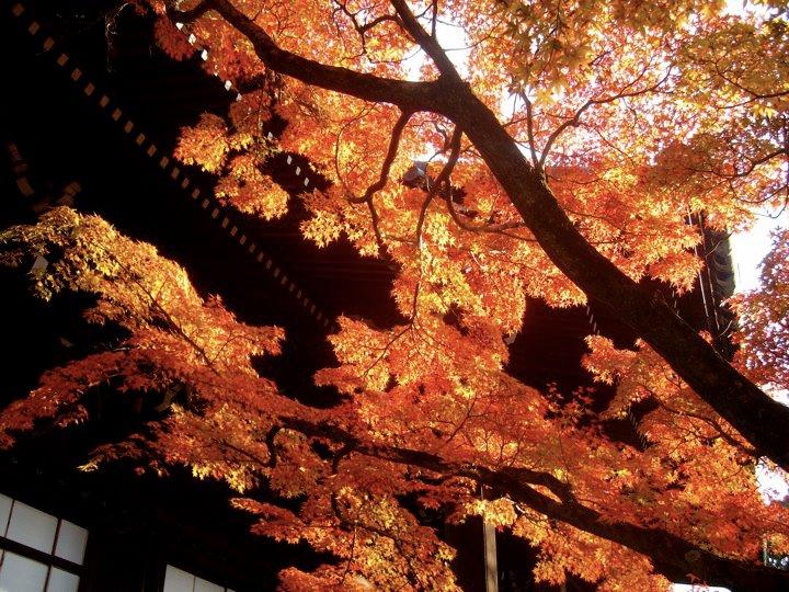 Shinnyodo autumn colours