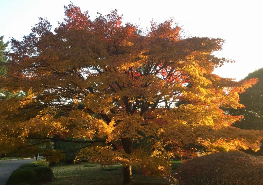 Autumn colours at Tokyo Imperial Palace East Gardens