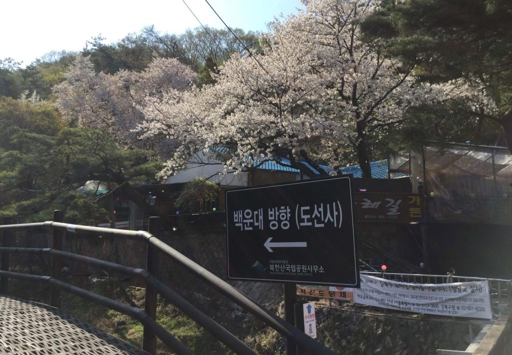 Cherry blossoms on Bukhansan