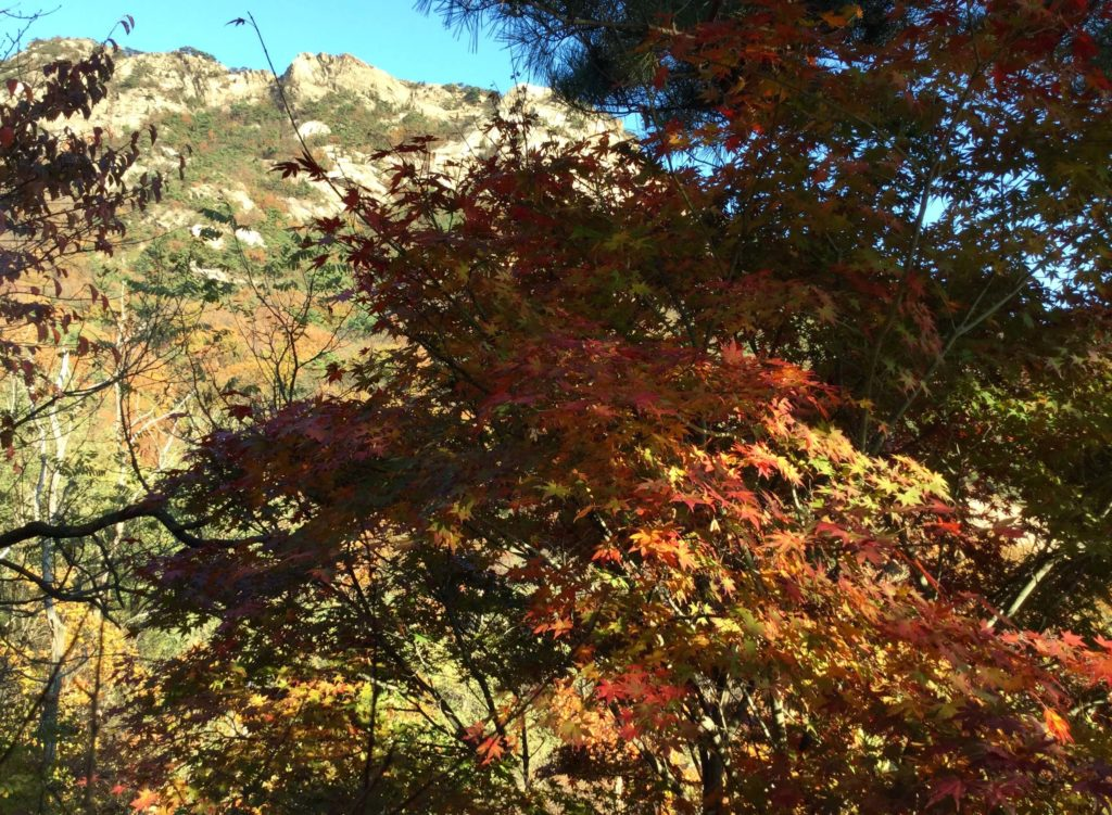 Red maple leaves on the Bibong Peak hike