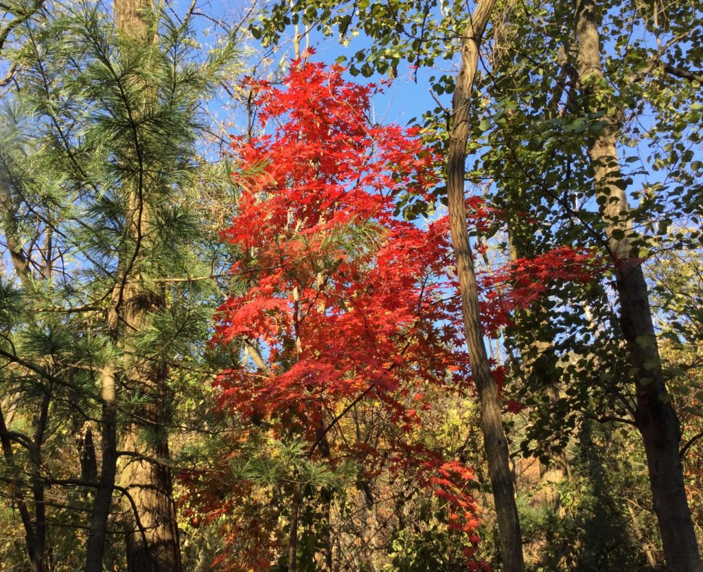 Red maple leaves on the Bibong Peak hike