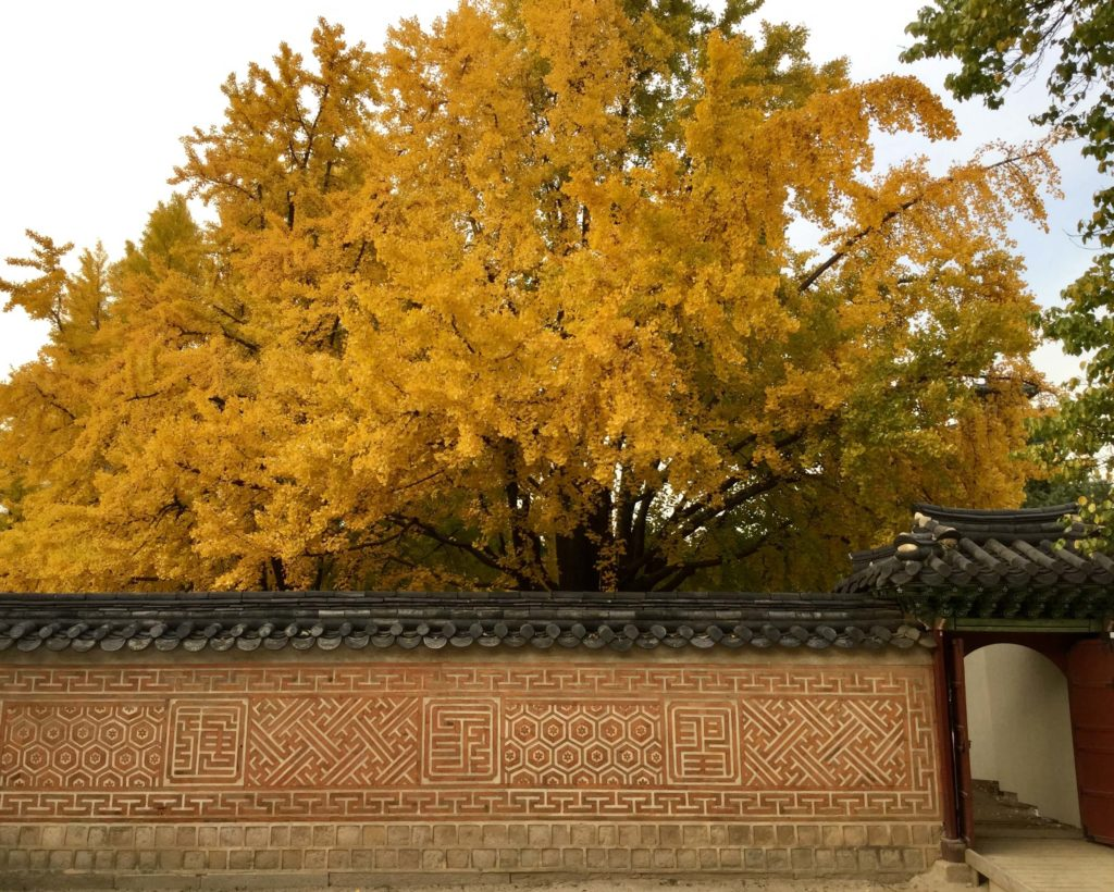 Autumn colours at Seoul's palaces