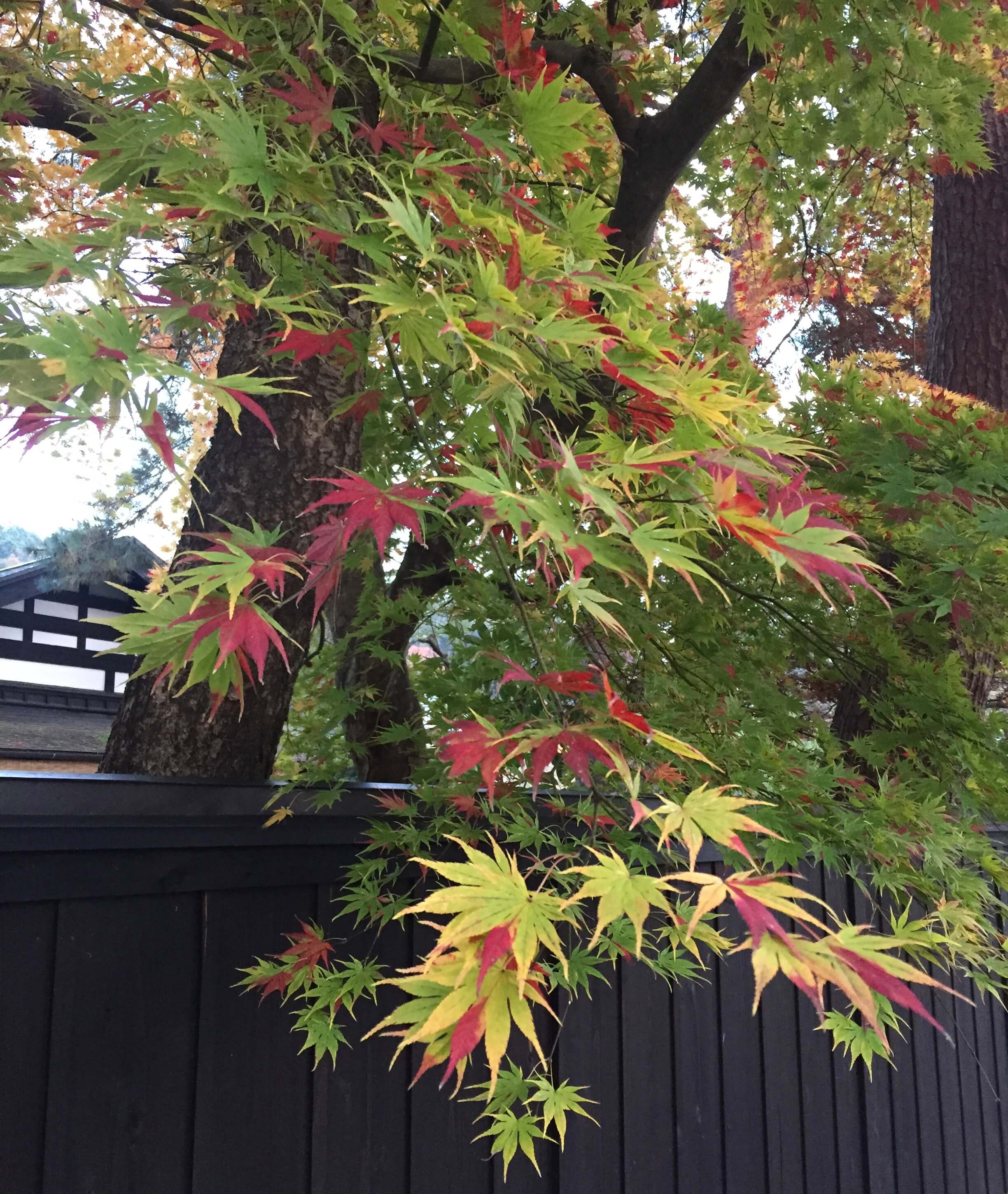 Autumn colours in Kakunodate, Akita