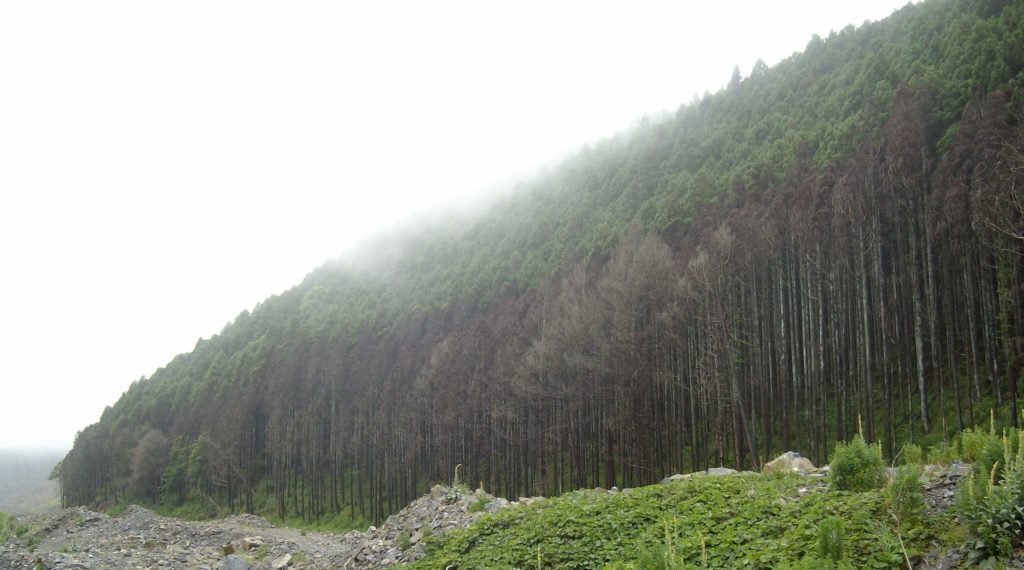 A row of dead trees near Minami Sanriku following the 2011 tsunami