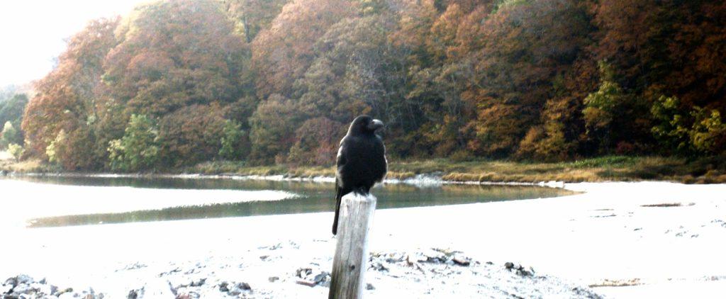 A crow at Osorezan, Aomori, Japan