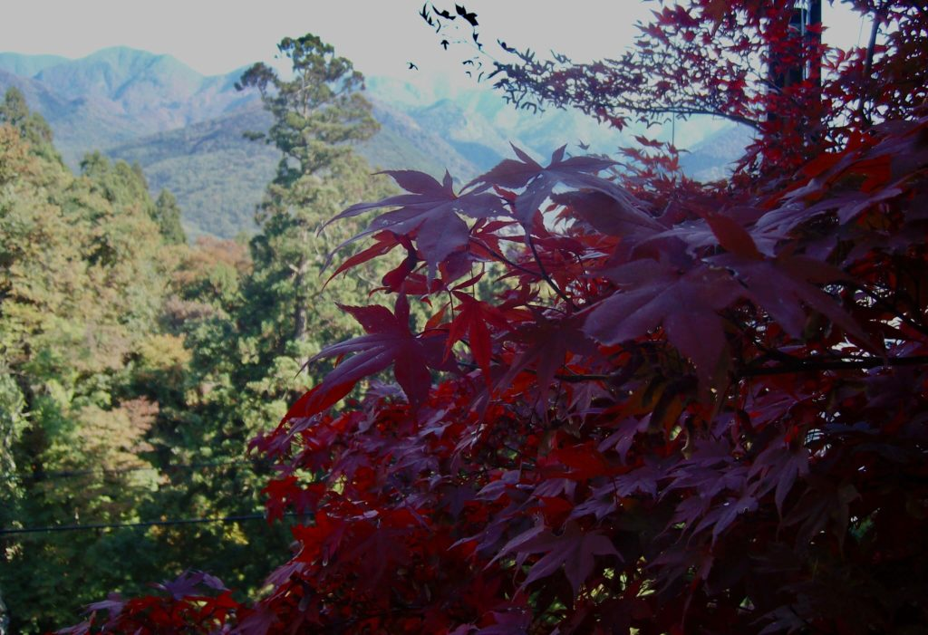 Autumn colours at Yamadera